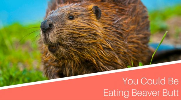 Are You Eating Beaver Butt in Your Protein Bar Without Even Knowing It?